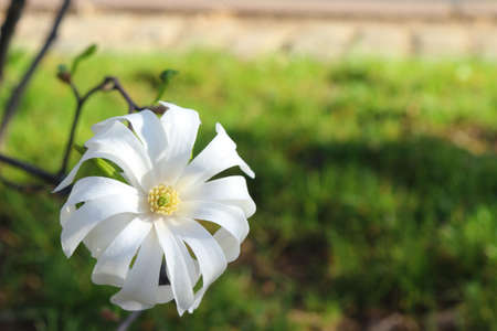 Single white flower Stock Photo