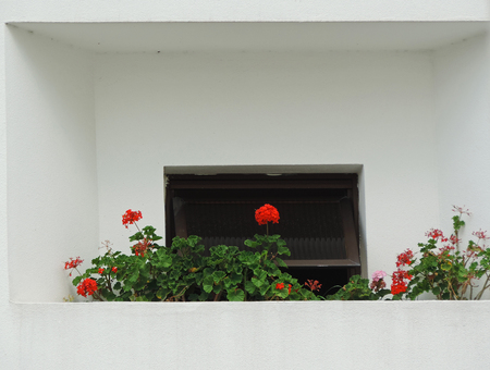 cultivable: A small garden in the buildings balcony