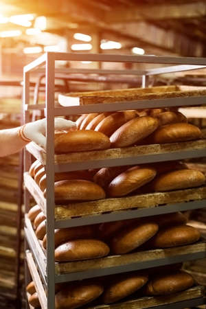 sulight: Brown bread loaves on rack. Hand touching bread on shelves. Big scale of production. Baked goods made for wholesale. Stock Photo