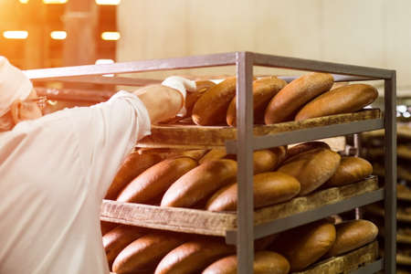 food plant: Brown bread on wooden rack. Worker touching bread on rack. Careful work of factory employee. Respect the fruits of labor.