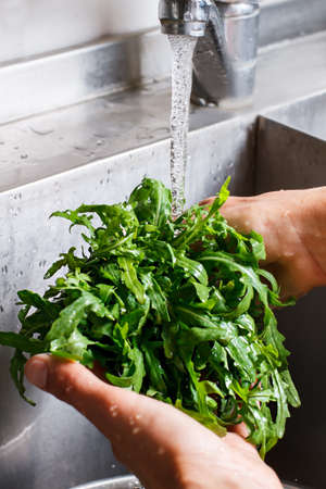roquette: Male hands washing roquette. Stock Photo