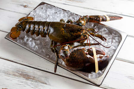 raw lobster: Raw lobster laying on ice. Lobster with tied claws. Seafood is the best delicacy. Its time to cook.
