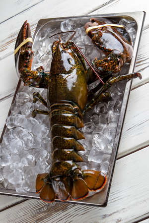 raw lobster: Raw lobster with tied claws. Brown lobster and ice cubes. Sea creature with strong shell. Claws and jaws.