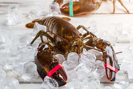 crustaceans: Raw lobsters and ice cubes. Lobsters with tied claws. Chef will soon come. Crustaceans on wooden table.