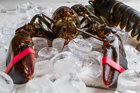 raw lobster: Ice cubes near raw lobster. Front view of fresh lobster. Key ingredient of savoury meal. Example of sea crustaceans. Stock Photo