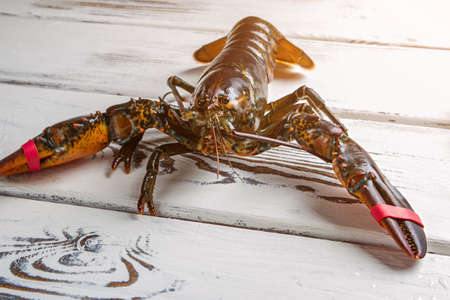 raw lobster: Raw lobster on wooden background. Bands on lobsters claws. Tied but still strong. Aggressive creature of the sea.