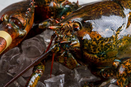 raw lobster: Eyes and mouth of lobster. Raw lobster lying on ice. Very convincing look. Fishermans best catch. Stock Photo