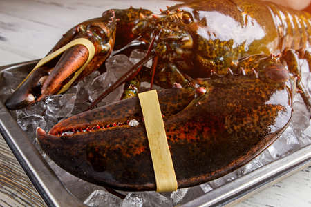 raw lobster: Raw lobster with giant claws. Tied lobster on ice cubes. Stay away from the claws. Shell thats hard to crack.