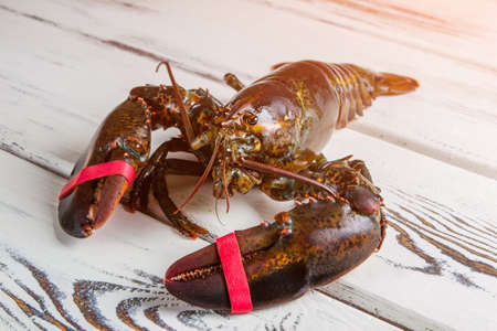 raw lobster: Whole raw lobster. Raw lobster on wooden surface. Who tied me up. Crustacean of dark color. Stock Photo