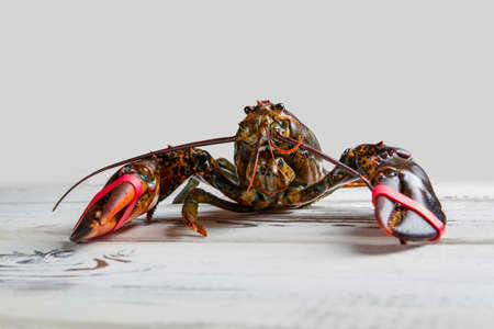 raw lobster: Front view of raw lobster. Lobster on white wooden surface. Natural camouflage of sea creature. You cant hide from me.