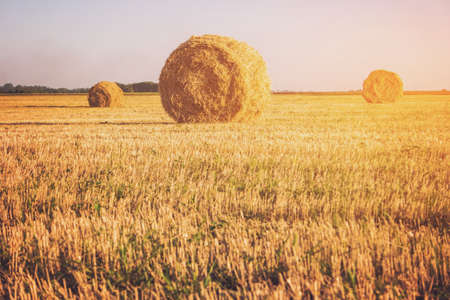 homeland: Field with bales of straw. Hay stacks and clear sky. Peace and labor. Homeland misses you.