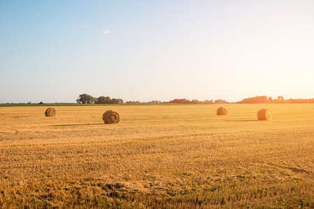 homeland: Yellow mown field. Clear sky at daytime. Feel the absolute freedom. Beauty of homeland.