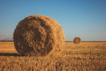 homeland: Stack of hay on field. Straw on sky background. Homeland needs working hands. Saving ecology is priority.
