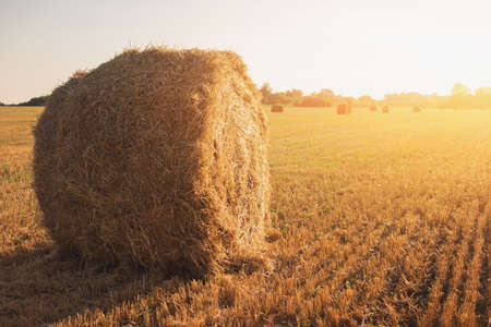 better: Bale of hay on field. Roll of straw and sky. Work and build better future. Stay loyal to homeland. Stock Photo