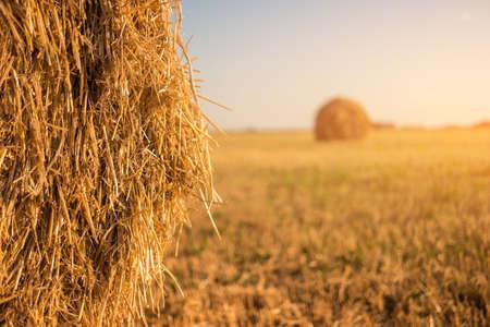 햇빛 아래 건초 더미. 흐리게 필드 배경입니다. 가축을위한 피드. 수확의 계절은 끝났습니다.