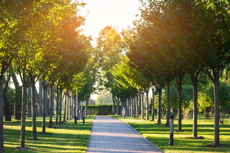Park alley and trees. Nature at daytime. Peaceful place outside city. Road to harmony.