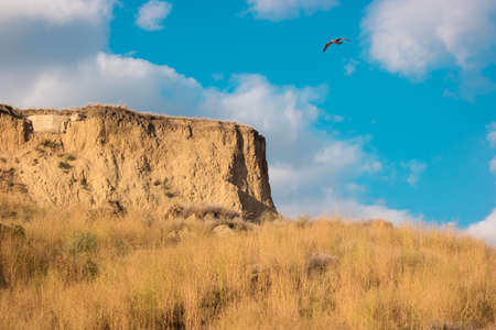 Bird flying near a hill. Seagull in the sky. The gift of freedom. Not afraid of heights. Stock Photo