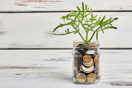 growing plant: Plant and jar with coins. Economic potential and growth. Stock Photo