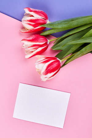 Spring flowers and card. How to apologize to woman. Stock Photo