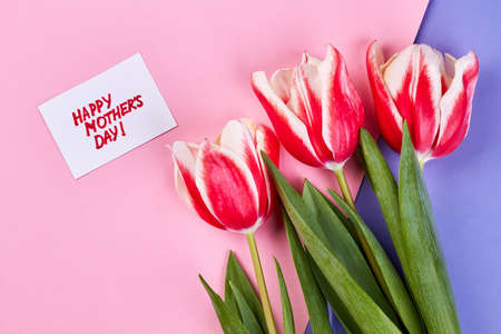 Coloured tulips and card. Holiday gift for mom. Stock Photo