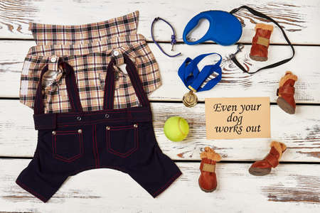 staying fit: Dogs clothing, ball and medal. How to stay fit. Stock Photo