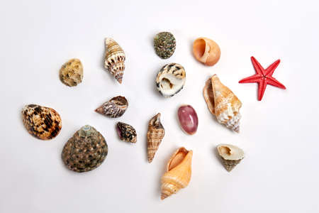 Collection of different sea shells. Small ocean objects on white background.