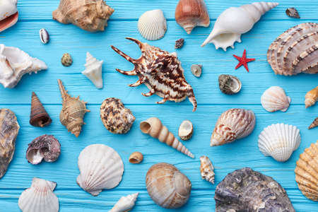 Sea shells collection close up. Decoration from sea shells on painted background. Stock Photo