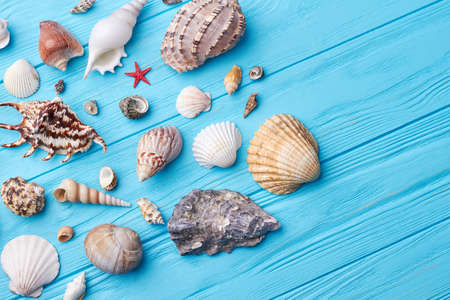 Set of sea shells close up. ?omposition from exotic sea objects, blue background.
