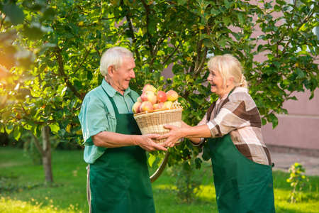 Cheerful couple and apple basket. Seniors in the garden smiling. Always help each other. Фото со стока