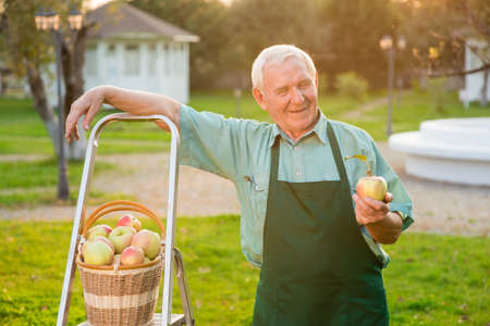 Gardener holding apple and smiling. Happy old man outdoors. Gardening business plan.