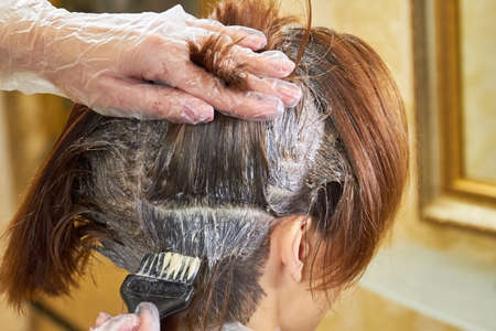 Brush dying female hair. Beautician is working with hair. Basic laws of hair color. Stock Photo