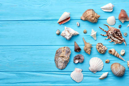 Composition of exotic sea shells. Marine natural objects on colored background.