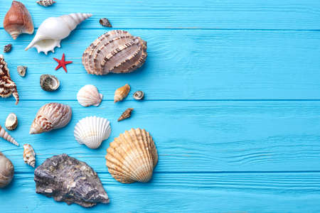 Pattern of exotic sea shells. Marine composition sea shells, blue wooden background.