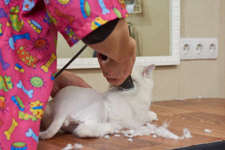 cat grooming: Pet getting haircut close up. Cat in grooming salon. Stock Photo