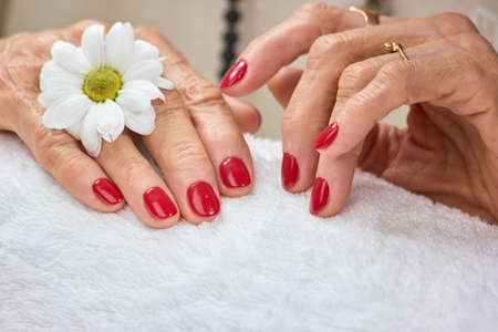 Female hands with manicure on towel. Beautiful red manicure with white chrysanthemum and towel close up.