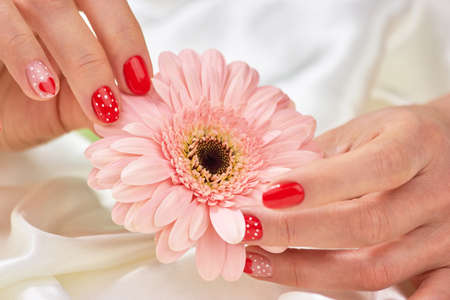 Female gentle hands holding gerbera. Peach color gerbera in female hands with romantic manicure. Feminine tenderness and care.