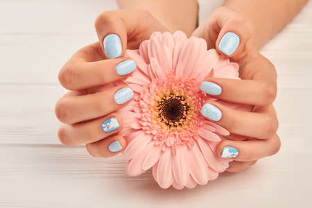 Gentle gerbera in female manicured hands. Beautiful female hands with fashion manicure holding peach color gerbera on white wooden background. Modern winter nail design. Stockfoto
