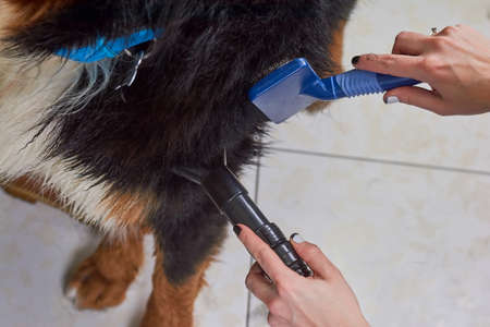 dryer: Dog grooming macro, female hands. Pet hair dryer, slicker brush.