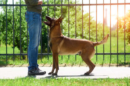 The dog is standing nearby its owner. The dog thinking its deserve some reward. Stock Photo