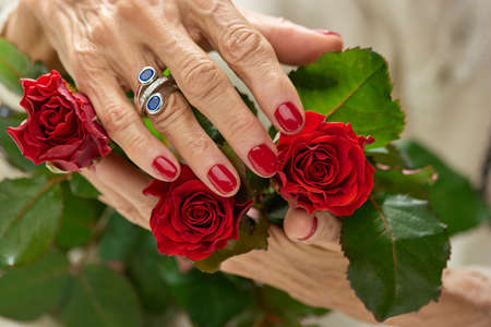 Old womans hand on red rose. Hands of senior woman with beautiful red manicure and silver ring holding red roses close up.