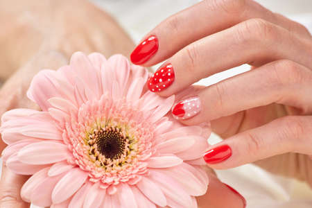 Well manicured female hand and gerbera. Woman hand with beautiful romantic manicure touching gentle gerbera. Delicate female manicure.