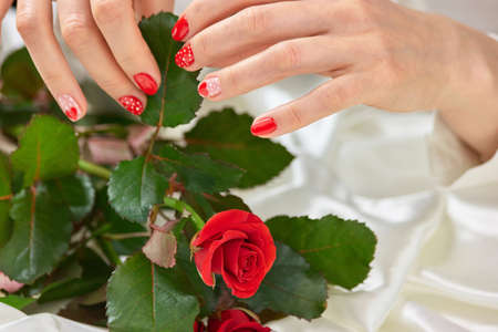 Beautiful rose in female manicured hands. Young woman hands with red lovely manicure holding green leaves of red rose. Saint Valentines Day concept. Stock Photo