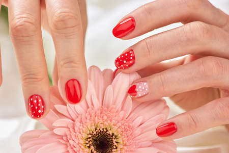 Female gentle manicure and flower. Caucasian woman hands with delicate manicure touching petals of gentle gerbera. Womans festive manicure.