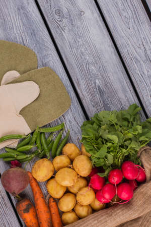Cook gloves and fresh ripe raw vegetables. Parsley, radish, potato, carrot, peas and beetroot.