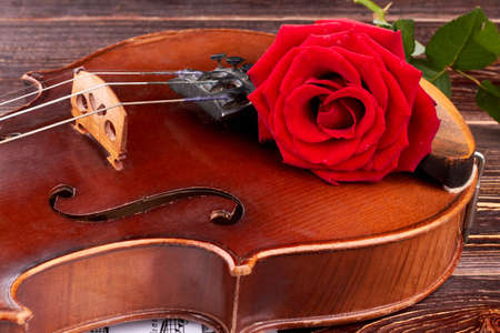 Close up old violin with red rose. Brown vintage violin with red rose flower close up. Bridge of old violin. Classical music instrument. Фото со стока