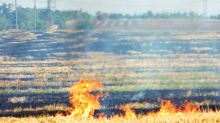 Dry grass burning in the forest. Field with burning dry grass, fire.
