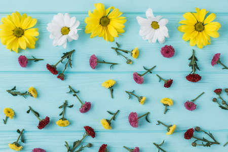 Chamomile and dahlila flowers scattered on blue wood. Flat lay, top view. Stock Photo