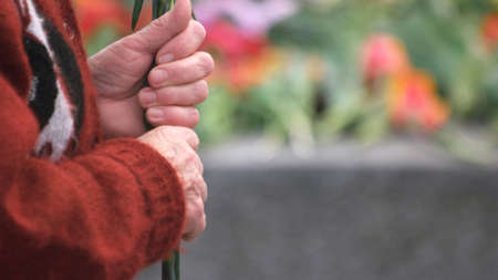 Close up old woman hands, side view. Wrinkled hands of elderly grandmother holding flowers, copy space.