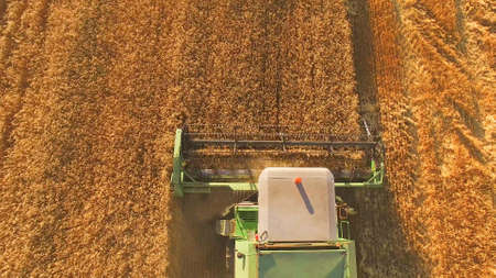 Combine moves on field. Top view of agricultural machine. Rich crop of wheat. Bread for the nation.