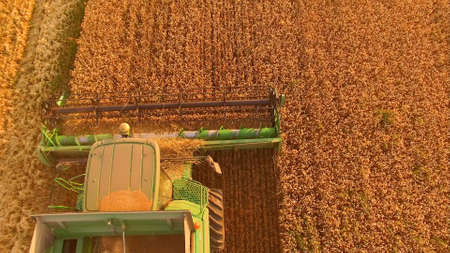 Combine cutting wheat top view. Green agricultural machine. Stok Fotoğraf - 119579128